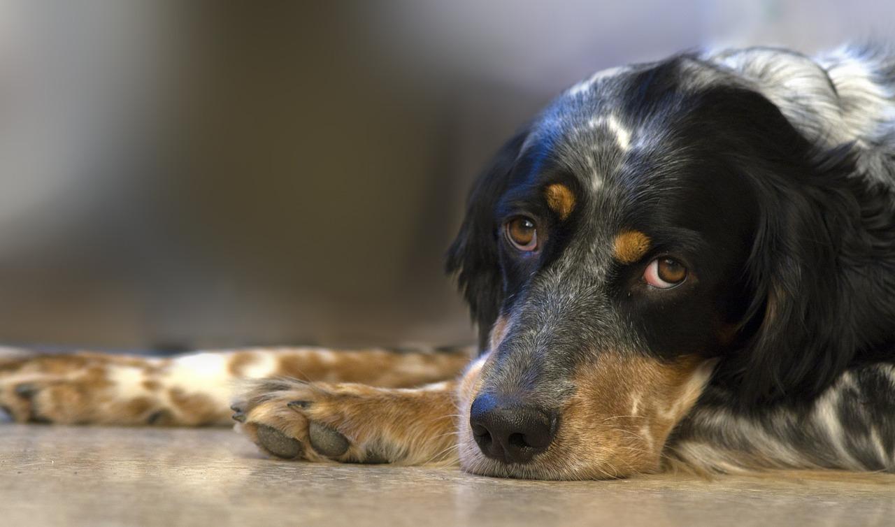 dog-551413_1280-2