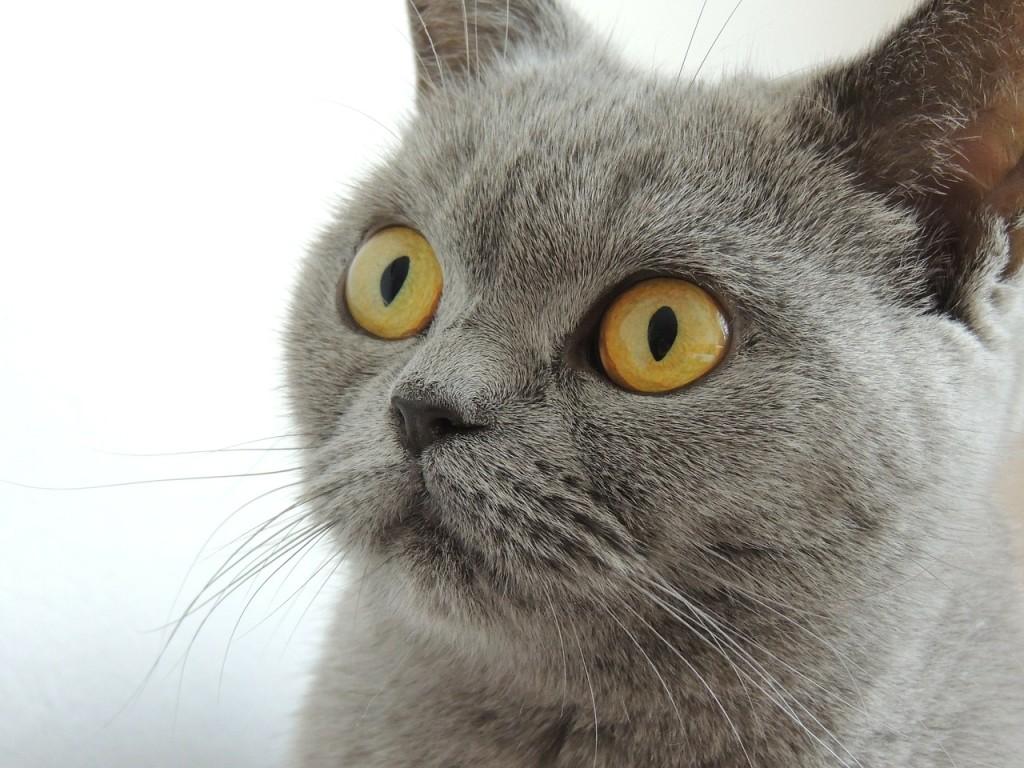 cat-179842_1280