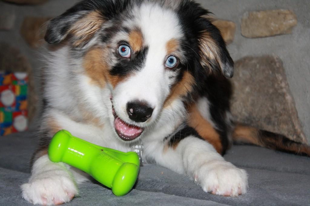 dog-669206_1280