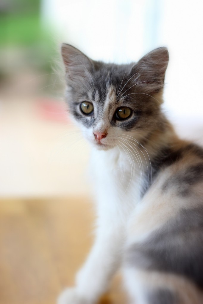 house-cat-281502_1280